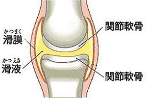 ひざ関節 滑液