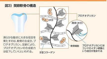 ひざ軟骨の構造